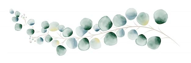 水彩の緑のユーカリの葉と枝