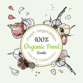 ニンニク野菜食料品ビンテージベクトルステッカー、ポスター、ラベル・テンプレート。流行に敏感な生鮮食品ライン手描きイラスト