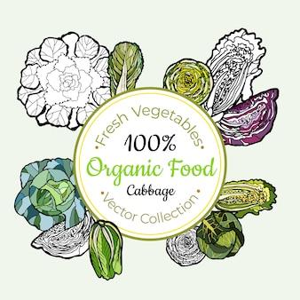 キャベツ白菜野菜ラベル