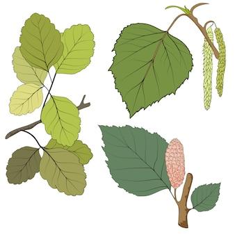 Набор из двенадцати разных осенних листьев на белом фоне