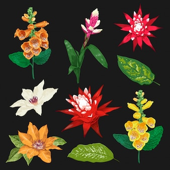 熱帯の花と葉を設定します。エキゾチックな花のコレクション。植物デザイン