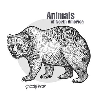 北米グリズリーの動物。