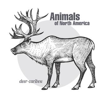 鹿カリブー。北米の動物シリーズ。