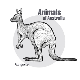 オーストラリアの動物カンガルー。