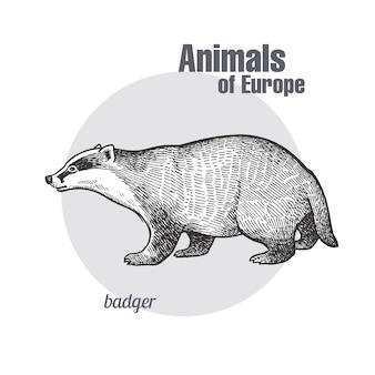 動物アナグマのビンテージ彫刻。