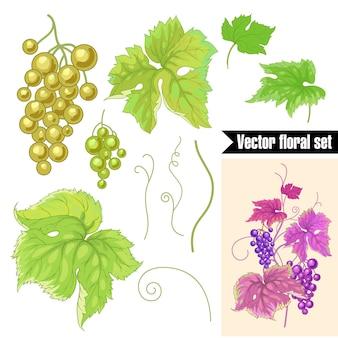 Набор фруктов и листьев дикого винограда на белом.