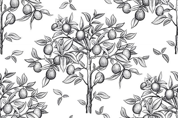 Бесшовный фон с цитрусовыми деревьями. черно-белый рисунок.
