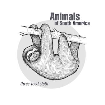 南アメリカナマケモノの動物。