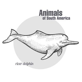 南アメリカの川イルカの動物。