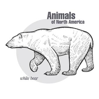 Полярный медведь. животные серии северная америка.