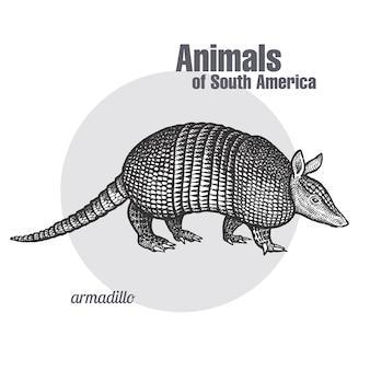 南アメリカの動物アルマジロ。