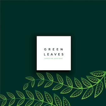 きれいな最小限の緑の葉の背景