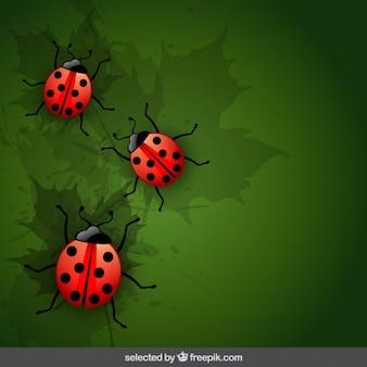 てんとう虫と自然の背景