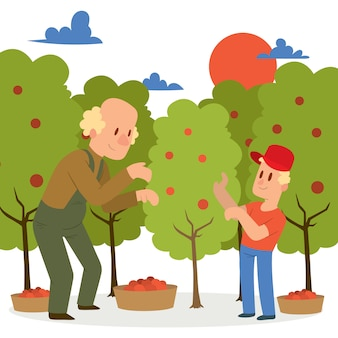 Фермер собирает урожай яблок в корзины.