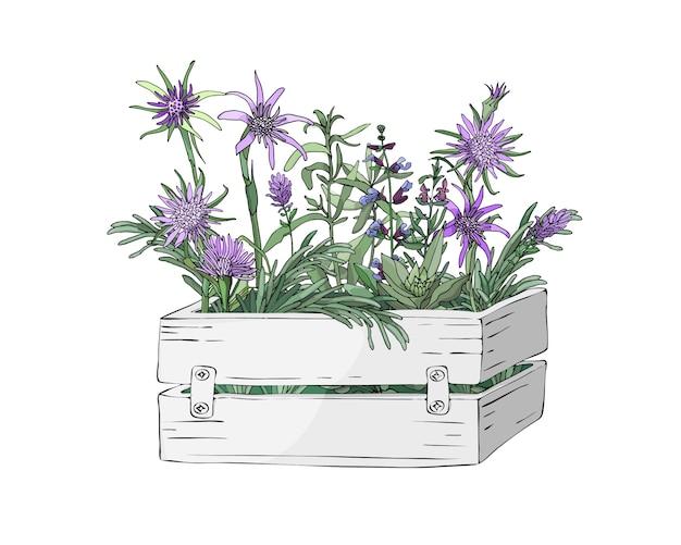 Сад деревянная белая коробка и фермы свежие кулинарные травы