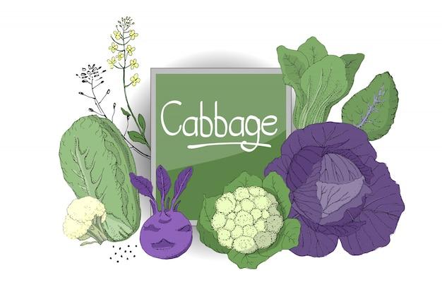 新鮮なカリフラワー、白菜、コールラビ、ナッパキャベツをセットします。