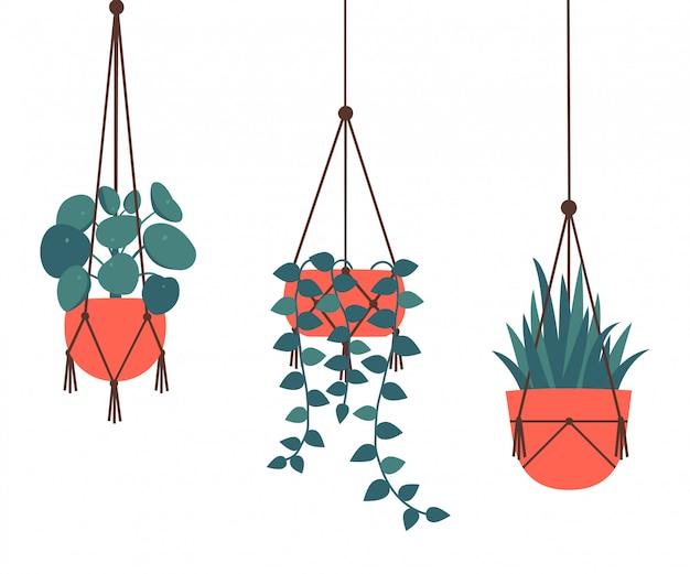 Декоративные висячие комнатные растения на белом фоне