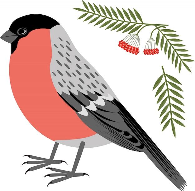 ウソクリスマス鳥のベクトルイラスト