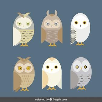 フクロウのコレクションの種類