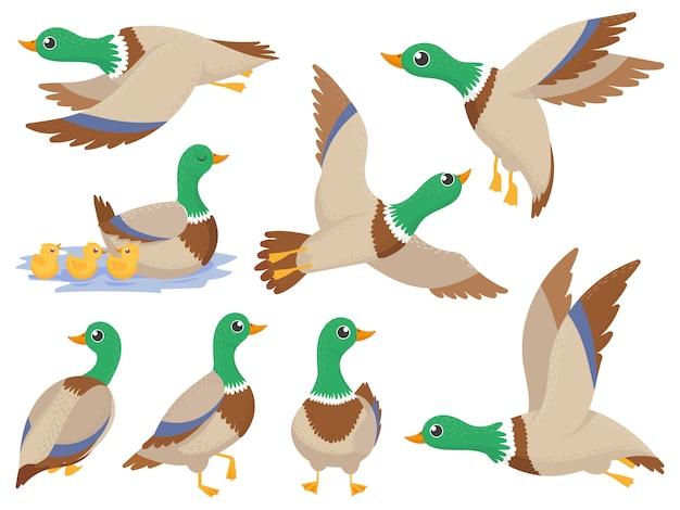 野生のアヒル、マガモ、かわいい飛んでいるガチョウと分離された緑の水泳カナード漫画セット