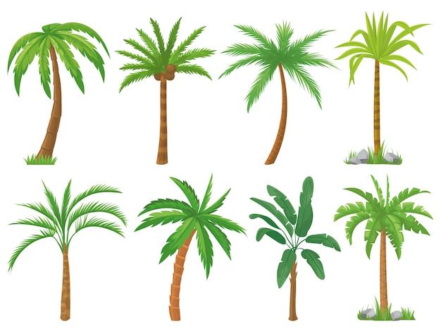 ヤシの木。熱帯の木の緑の葉、ビーチヤシの木、レトロなカリフォルニア緑分離セット