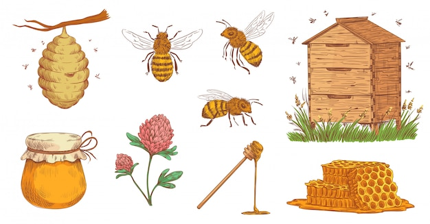 Ручной обращается медоносная пчела. пчеловод гравировка, пчелиные соты и старинные пчеловодческие фермы векторная иллюстрация набор