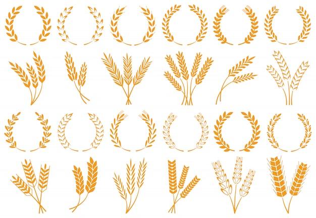 小麦または大麦の穂
