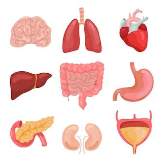 漫画の人体器官。健康的な消化、循環。カルテセットの臓器解剖学アイコン
