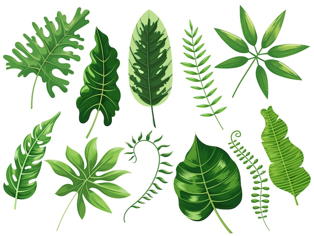熱帯の葉。エキゾチックな熱帯の葉、植物の熱帯雨林、熱帯旅行葉絵画漫画分離イラストセット