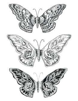 Декоративный эскиз бабочки