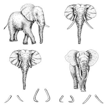 Комплект значка эскиза слона иллюстрация нарисованная рукой. слон тату искусства или полиграфический дизайн.