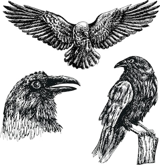 Черная ворона птица вектор эскиз изолированные