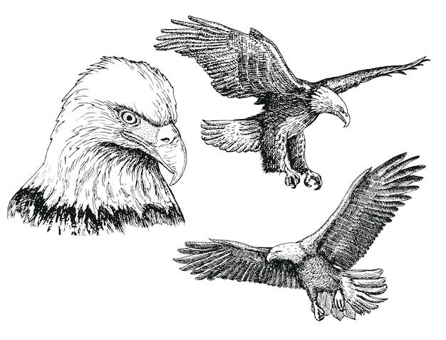 Орел птица эскиз значок набор