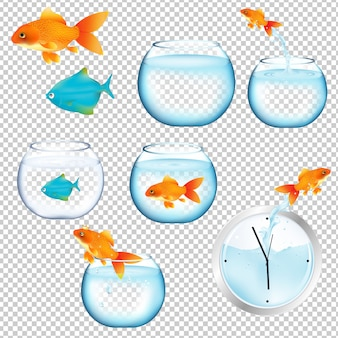 Набор рыб и аквариумов