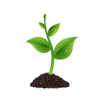 白い背景と緑の芽