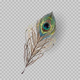 透明な背景に孔雀の羽。