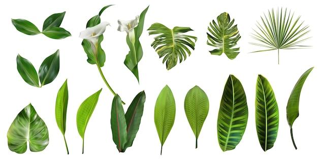 Коллекция тропических листьев, изолированные