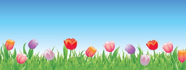 春のかわいいチューリップ