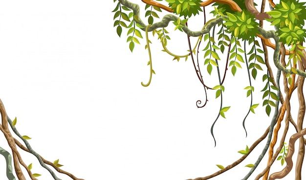 Рамка из лианы, ветки и тропические листья.