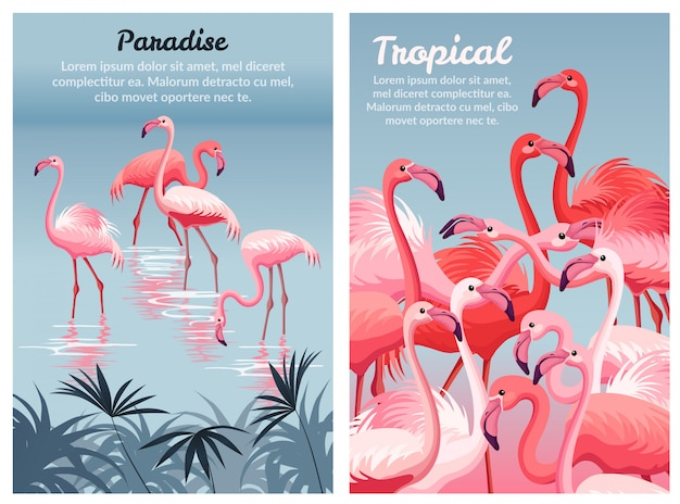 Шаблон постера фламинго.
