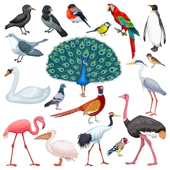 鳥を設定します。