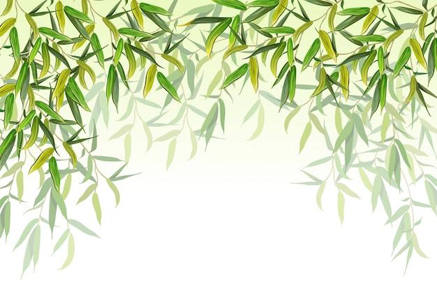 Ветви ивы. векторная иллюстрация