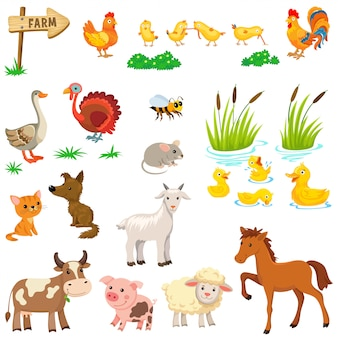 家畜を設定します。