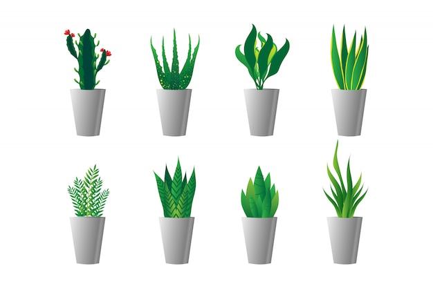 白い鍋に緑の植物のセット