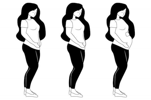 妊娠の段階。妊娠中の女性の腹の図。