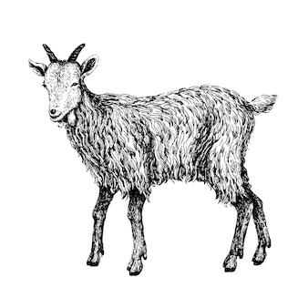 ビンテージスタイルのヤギ