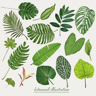 トロピカル、葉、植物、ベクトル、イラスト