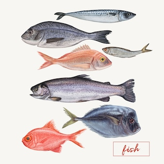異なる詳細な魚のセット