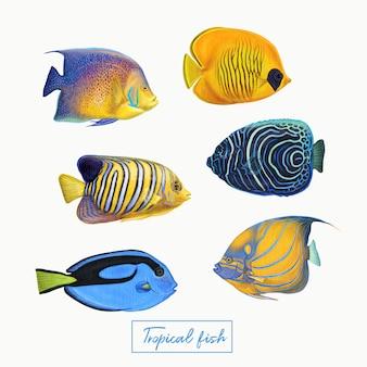 熱帯のカラフルな魚