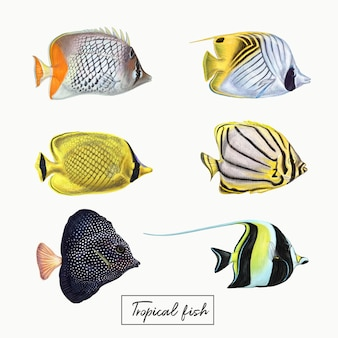 Разноцветные тропические рыбы